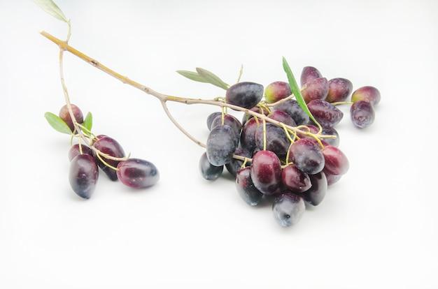 Olive fresche appena raccolte su priorità bassa bianca