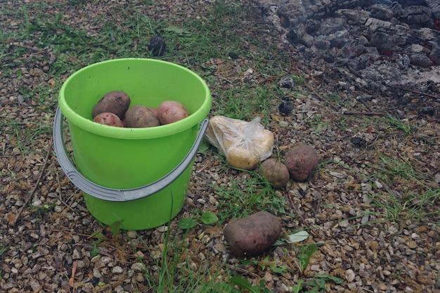 Patate biologiche appena raccolte in un secchio di plastica verde. cucinare patate sul rogo in una gita in campeggio, fare escursioni.