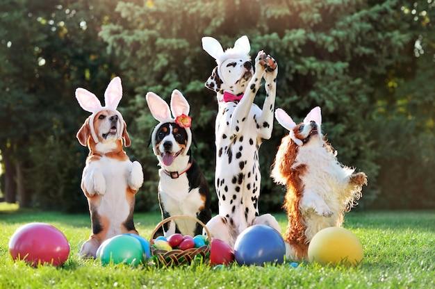 Cani degli amici che indossano le orecchie del coniglietto alla caccia dell'uovo di pasqua