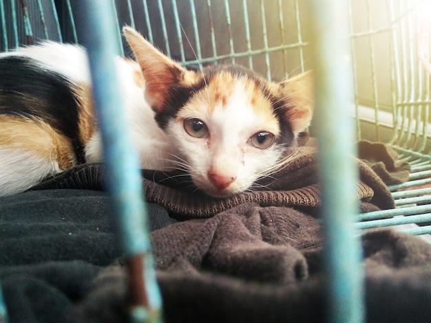 Gattino ferito spaventato catturato in una trappola umanitaria - i feriti sono intrappolati.