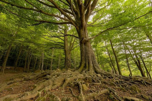 Dal basso il paesaggio di una foresta di alberi verdi con radici in primavera