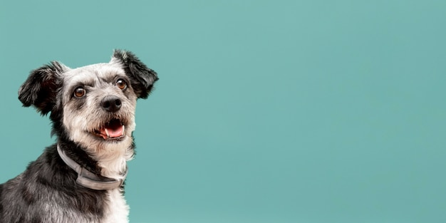 Vista frontale del cucciolo adorabile della razza mista con lo spazio della copia