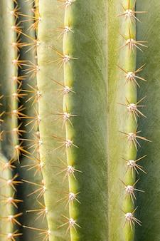 Vista frontale del cactus