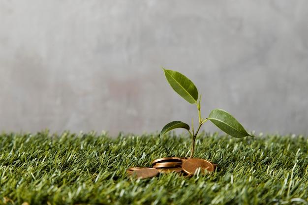Vista frontale delle monete sull'erba con la pianta