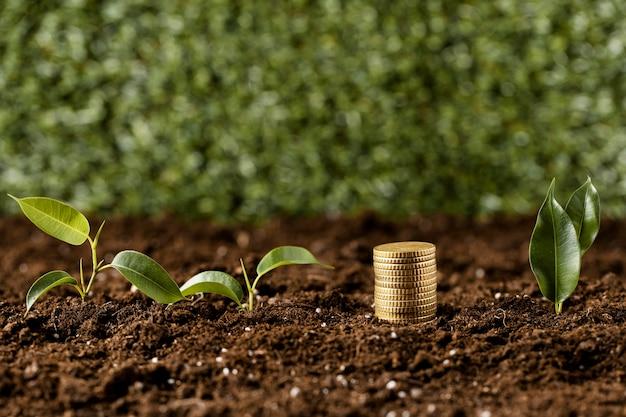 Vista frontale di monete impilate su sporcizia con piante