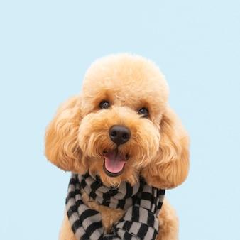 Cane carino vista frontale con sciarpa