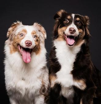 Vista frontale di cani svegli seduti