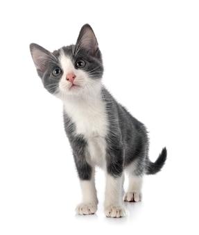 Vista frontale del simpatico gattino
