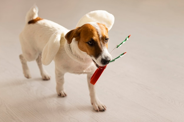 Vista frontale del cane con il concetto di natale