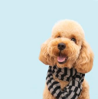 Cane carino domestico vista frontale con sciarpa