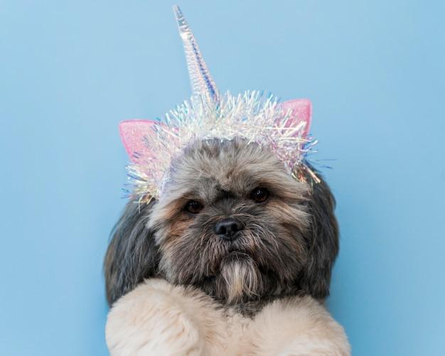 Vista frontale del concetto di cane carino divertente