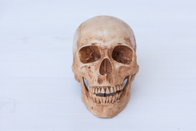 Vista frontale del teschio umano