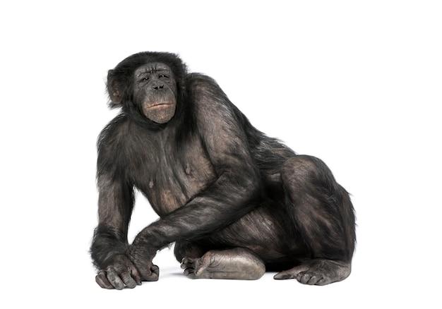 Vista frontale di una scimmia sdraiata