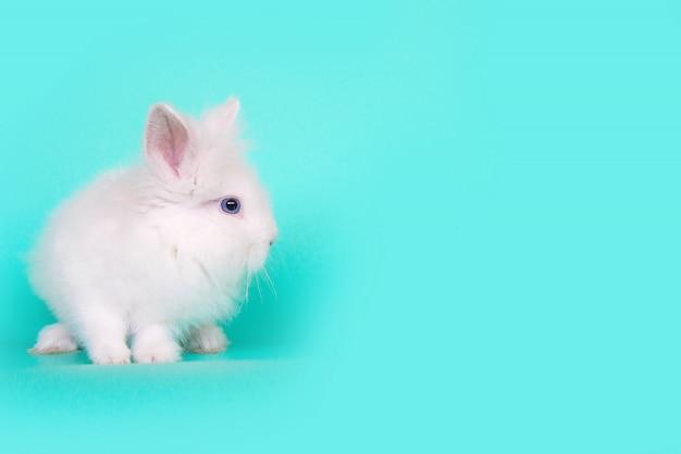 Vista frontale di un coniglio di coniglietto bianco che si siede sulle sue zampe