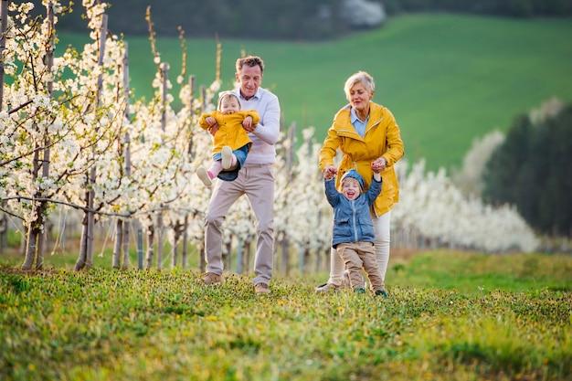 Vista frontale dei nonni anziani con i nipoti del bambino che camminano nel frutteto in primavera.