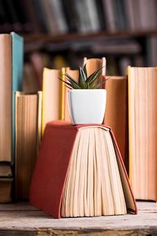 Vista frontale della succulenta in piedi sul libro con copertina rigida in biblioteca