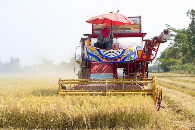Vista frontale del riso raccolto thai farmer con auto in thailandia.