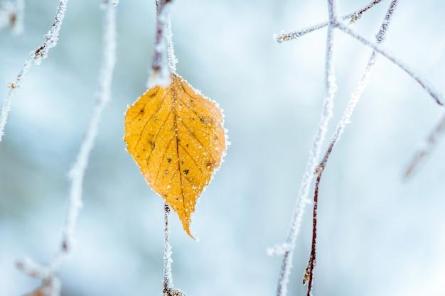 Foglia secca di betulla coperta di brina sul ramo di albero_