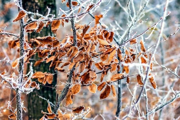 Rami coperti di brina con foglie nella foresta