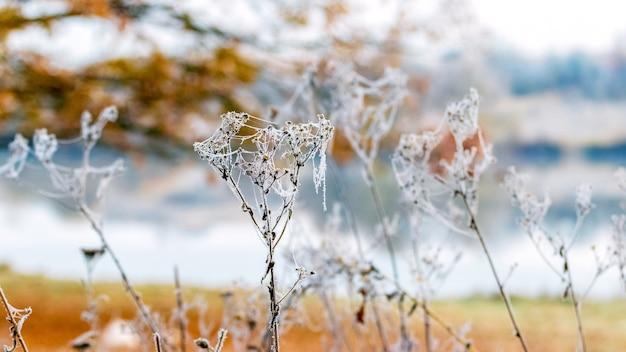 Germogli d'erba secchi coperti di brina vicino al fiume
