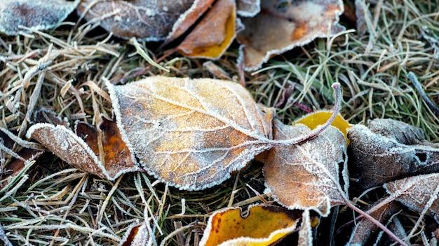 Foglie secche cadute coperte di brina sull'erba