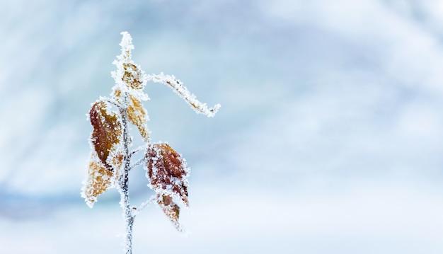 Ramo di albero coperto di brina con foglie secche su sfondo invernale sfocato_