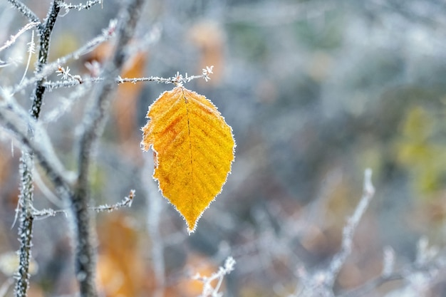 Foglia gialla coperta di brina su un albero
