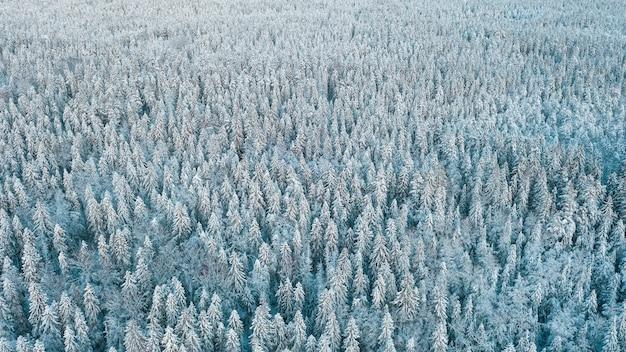 Frosty foresta settentrionale nella neve dopo la nevicata vista dall'alto da un drone, texture