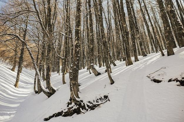 Paesaggio invernale gelido nel bosco innevato in montagna