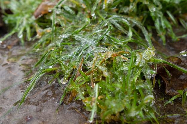 Erba congelata
