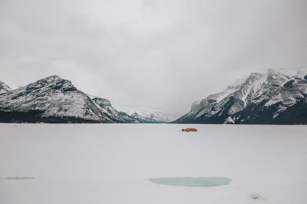 Il lago ghiacciato minnewanka in alberta, canada