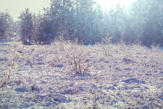 Fine congelata del prato di tardo autunno su.