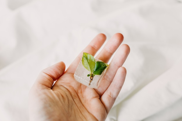 La piccola pianta congelata germoglia nel cubetto di ghiaccio