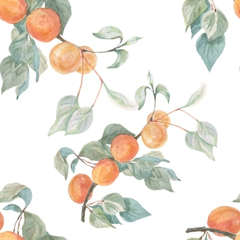 Reticolo senza giunte disegnato a mano dell'illustrazione dell'acquerello delle albicocche della frutta