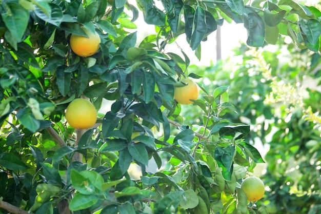 Sfondo di alberi da frutto.