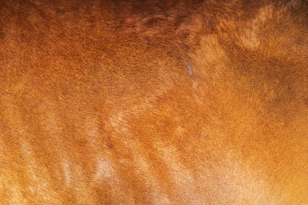 Full frame shot di pelliccia di cavallo marrone o sfondo di crine di cavallo