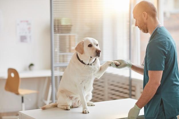 Ritratto a figura intera del cane labrador bianco che dà la zampa al veterinario presso la clinica veterinaria illuminata dalla luce del sole, spazio copia