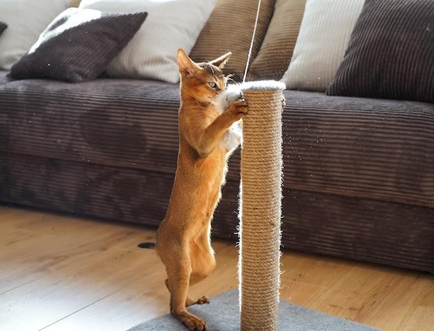 Un simpatico gattino abissino che gioca con un topo in un soggiorno