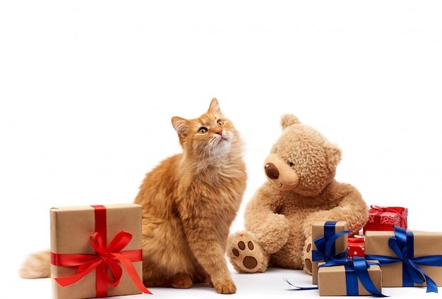 Divertente gatto zenzero adulto seduto in mezzo a scatole avvolte in carta marrone e legato con ribbo di seta