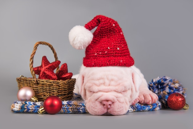 Il cucciolo di cane divertente del bulldog americano con il cappello di babbo natale sta dormendo. sfondo di natale