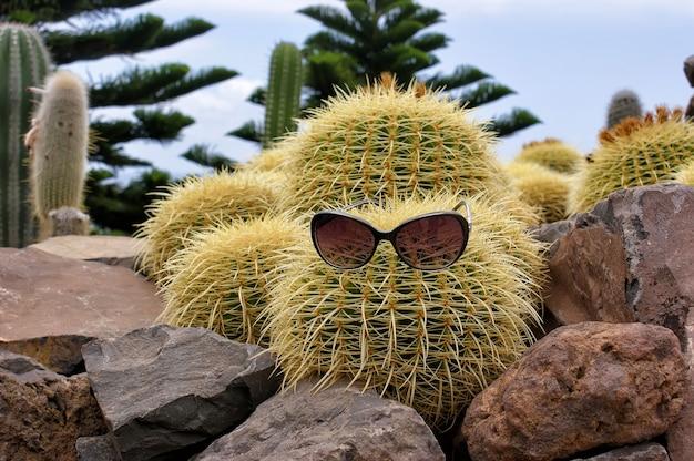 Cactus divertente con gli occhiali circondato da pietre.