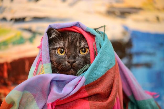 Gatto divertente coperto con una coperta