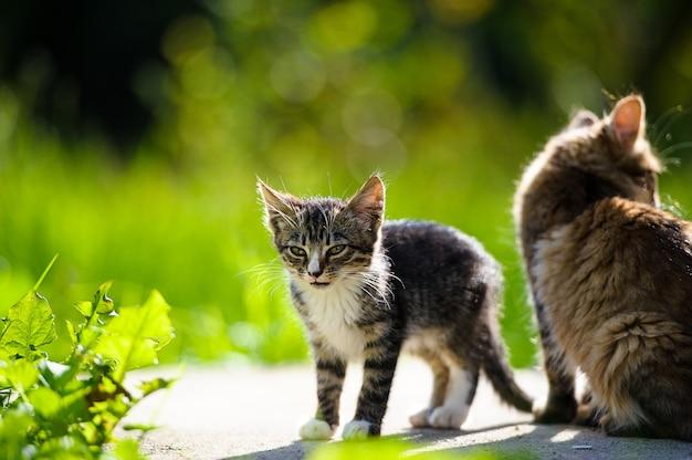 Gatto divertente e gattino nel parco
