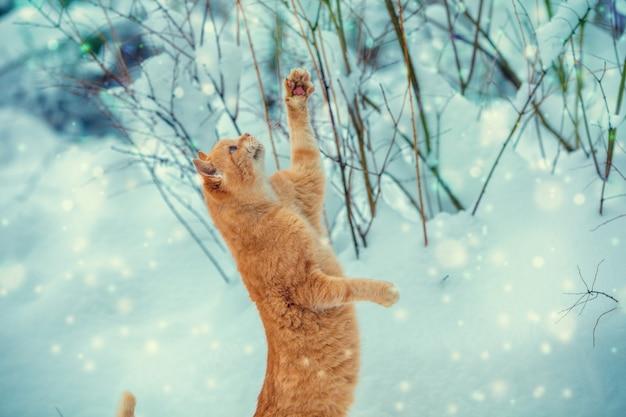 Gatto divertente con le zampe in aria che cattura i fiocchi di neve all'aperto in inverno