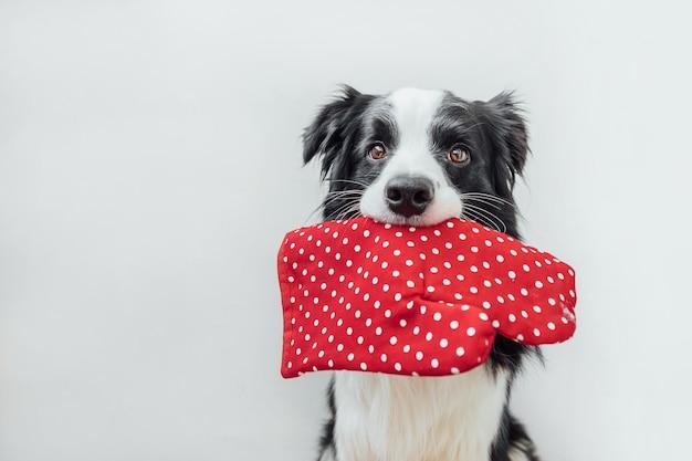 Divertente simpatico cucciolo di cane border collie tenendo la cucina presina, guanto da forno in bocca isolati su sfondo bianco. cena di cucina del cane dello chef. cibo fatto in casa, concetto di menu del ristorante. processo di cottura.