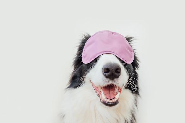 Divertente carino sorridente cucciolo di cane border collie con dormire maschera per gli occhi isolati su sfondo bianco