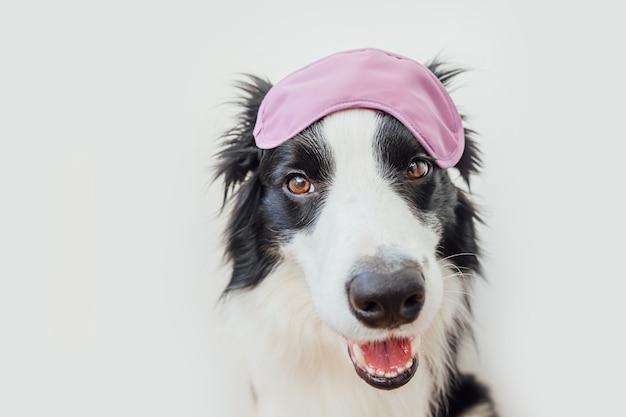 Border collie sorridente sveglio divertente del cane di cucciolo con la mascherina di occhio di sonno isolata su bianco