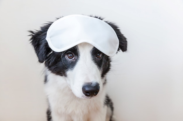 Cucciolo di cane sorridente sveglio divertente border collie con la maschera di occhio di sonno isolata