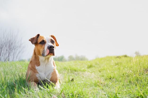 Cane divertente ad un campo in primavera.