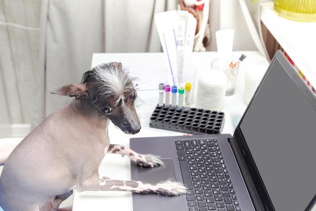 Il cane divertente esamina il computer portatile. studio medico, laptop, attrezzatura medica.